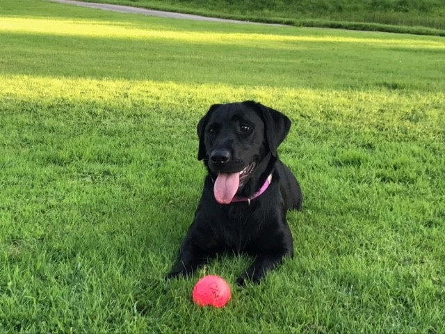 Meet the Team : Canine Colleagues - Aggie